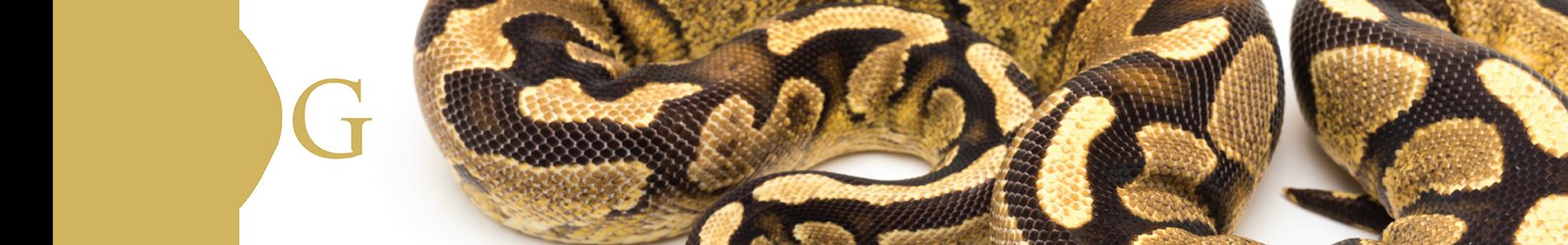 Snake Blog Header